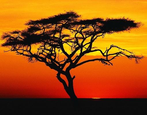 Не ходите, дети, в Африку гулять